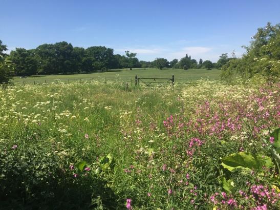 wild flower enclosure may 20